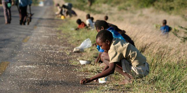 Arkivbild. Barn plockar majskorn som en lastbil på genomresa har tappat.  TSVANGIRAYI MUKWAZHI / TT NYHETSBYRÅN