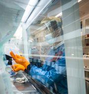 Covid19-tester på Scilifelab vid Karolinska institutet. Magnus Hjalmarson Neideman/SvD/TT / TT NYHETSBYRÅN