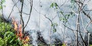 Över 30 mark- och skogsbränder har Storstockholms brandförsvar ryckt ut på under det senaste dygnet. Tomas Oneborg/SvD/TT / TT NYHETSBYRÅN