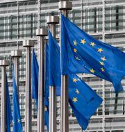 Flaggor utanför EU-kommissionens byggnad i Bryssel. Yves Logghe / TT NYHETSBYRÅN