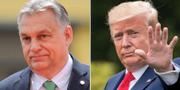 Viktor Orbán och Donald Trump  TT
