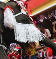 Elefant med julutstyrsel norr om Bangkok/En flicka deltar i en julparad med elefanter 2019, Ayutthaya, Thailand. TT