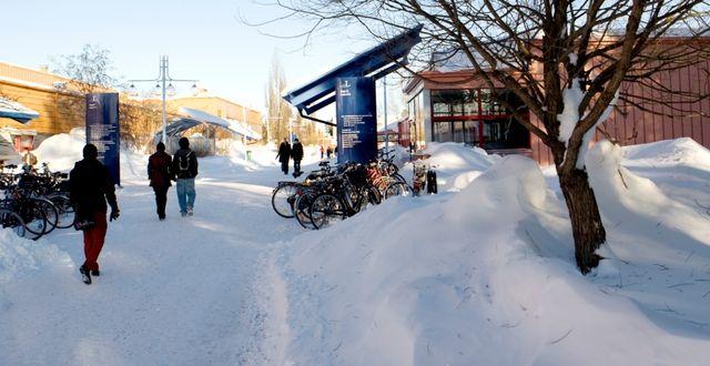 LTU:s campus i Luleå. Tomas Bergman / Pressbild LTU
