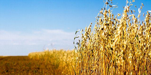 I forskningsprojektet UNISECO ska 10 gårdar öka sin andel grödor av  Colourbox