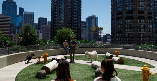 Hundrastgård på taket till Amazons kontor.  JORDAN STEAD / (JORDAN STEAD / Amazon)