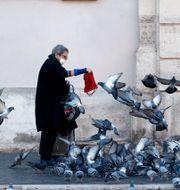 Kvinna matar fåglar i Rom. Cecilia Fabiano / TT NYHETSBYRÅN