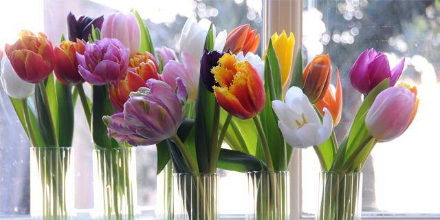 Sätt färg på hemmet med ett fång tulpaner.  Blomsterfrämjandet