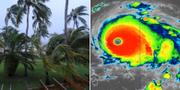 Vindpinade palmer på Bahamas/Grafik över stormen Dorian. TT/NHC.