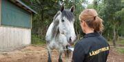 Djurskyddsinspektör på uppdrag/arkivbild. DRAGO PRVULOVIC / TT