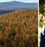 Skogsstyrelsens generaldirektör Herman Sundqvist lägger ner utredning om ersättningar till markägare.  TT