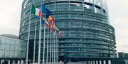 EU-parlamentsbyggnaden i Bryssel.  SEPP SPIEGL