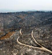 En skog i byn Agia Anna som påverkats av elden. Michael Varaklas / TT NYHETSBYRÅN