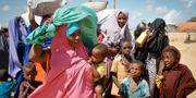 Somalier flyr torkan i landet.  Farah Abdi Warsameh / TT NYHETSBYRÅN/ NTB Scanpix