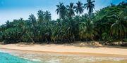 Havet runt São Tomé och Príncipe är så fullt av delfiner, valar och havssköldpaddor att man har planer på att göra det till ett marint reservat, enligt resemagasinet Vagabond. IBL