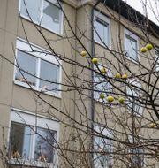 Lägenheten i Haninge där mannen tros ha hållits isolerad i över 30 år. TT