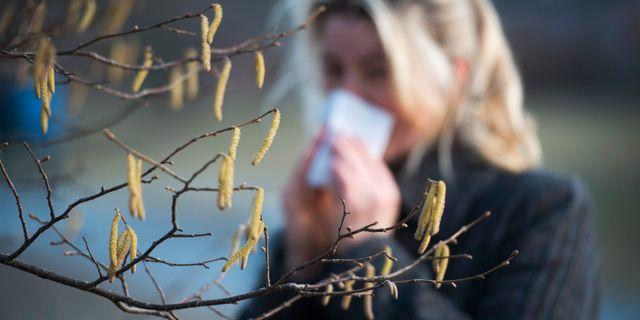 Pollenallergiker ska medicinera som vanligt. FREDRIK SANDBERG / TT / TT NYHETSBYRÅN