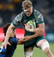 Australien möter Argentina i Tri-Nations Rugby. Arkivbild.  Rick Rycroft / TT NYHETSBYRÅN