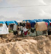 al-Hol lägret i Syrien.  Maya Alleruzzo / TT NYHETSBYRÅN