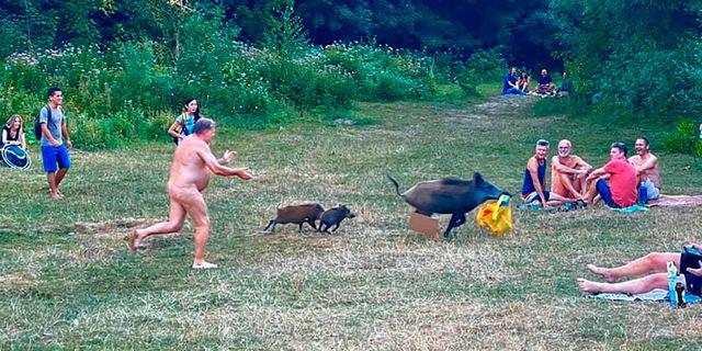 En nakenbadande man jagar en vildsvinshona och hennes två kultingar. ADELE LANDAUER / TT NYHETSBYR�N