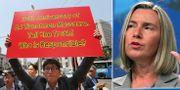 Demonstration i Sydkorea mot Kinas regim / Federica Mogherini. TT.