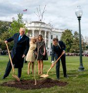 Donald och Melania Trump samt Emmanuel och Brigitte Macron odlar ett träd utanför Vita huset år 2018. Andrew Harnik / TT NYHETSBYRÅN