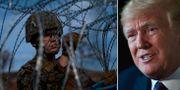 Gränsen/Donald Trump. TT