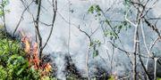Bild från markbranden i Stortorp i södra Stockholm i maj. Tomas Oneborg/SvD/TT / TT NYHETSBYRÅN