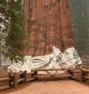 General Sherman/brand i Sequoia National Park TT