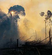 Regnskog förstörd av skogsbrand. Edmar Barros / TT NYHETSBYRÅN