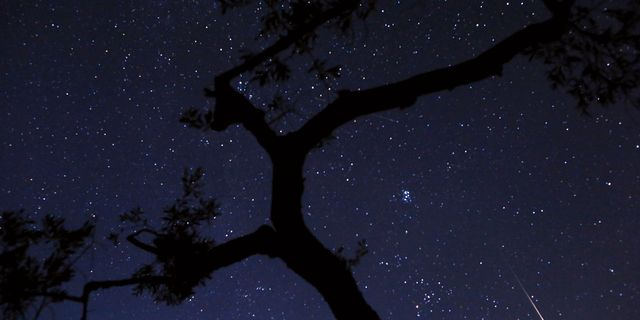 En stjärnhimmel. Petros Giannakouris / TT NYHETSBYRÅN/ NTB Scanpix