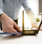 En sladds sätts in i en router för internet. Shutterstock/Proxima Studio