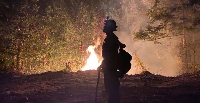 Bränderna härjar på USA:s östkust. Matthew McFarland / TT NYHETSBYRÅN