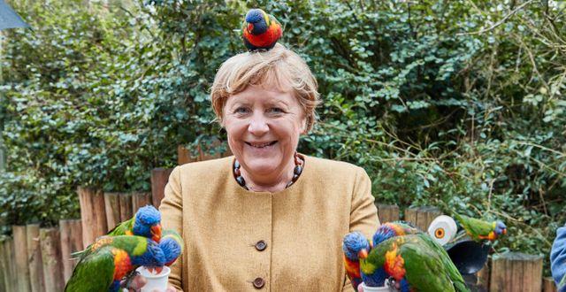 Angela Merkel Georg Wendt / TT NYHETSBYRÅN