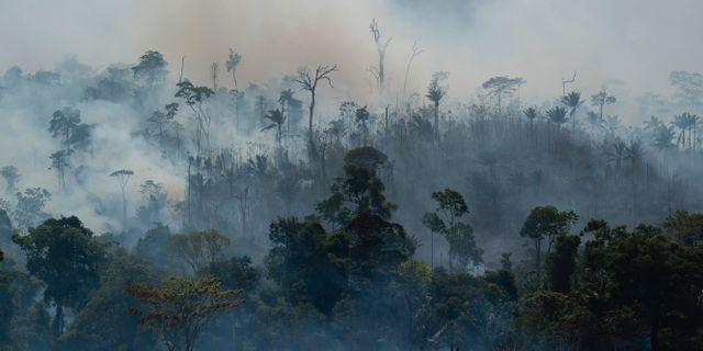 Skogsbrand i Amazonas i augusti 2019. Leo Correa / TT NYHETSBYRÅN