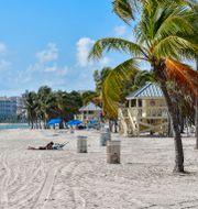 Strand i Miami. Jonas Ekströmer/TT / TT NYHETSBYRÅN