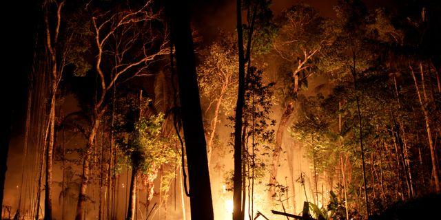 Skogsbrand i närheten av Porto Velho i Brasilien den 31 augusti.  RICARDO MORAES / TT NYHETSBYRÅN