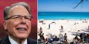 Wayne LaPierre/En strand i Bahamas TT