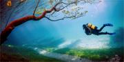 Vattnet blir sällan varmare än sex plusgrader. Scanpix