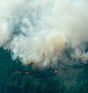 Flygbilder över branden runt Ljusdal. Maja Suslin/TT / TT NYHETSBYRÅN