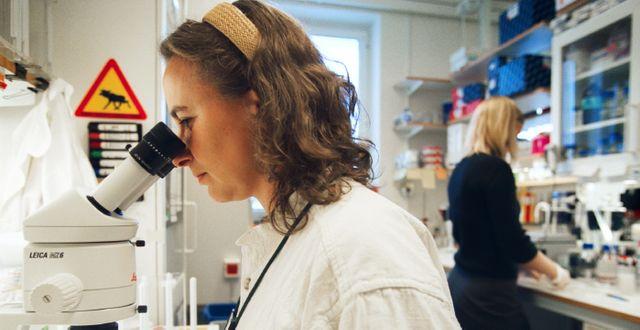 Laboratoriemiljö på Karolinska institutet FREDRIK PERSSON / TT NYHETSBYRÅN