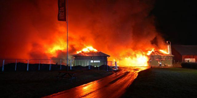 Flera kor har blivit innebrända i en brand på en gård vis Vreta utbildningscentrum utanför Linköping.  Jeppe Gustafsson/TT / TT NYHETSBYRÅN
