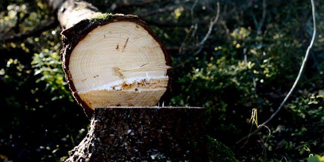 Man svart skadad vid skogsarbete