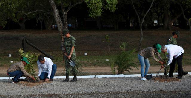 Trädplantering i Colombia. Felix Marquez / TT NYHETSBYRÅN