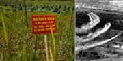 Varningsskylt på ett fält där Agent Orange använts/Användning av Agent Orange under Vietnamkriget. TT