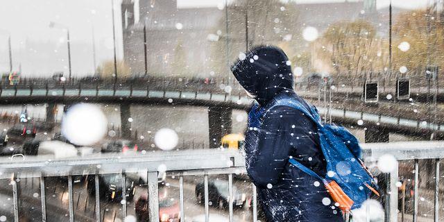 Träden hade redan börjat skifta i grönt i Stockholm när snöfallet kom i maj Tomas Oneborg/SvD/TT / TT NYHETSBYRÅN