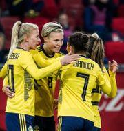 Svenska landslaget. ALEKSANDRA SZMIGIEL / BILDBYRÅN