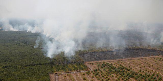 Skogsbränderna i Indonesien har rasat i över en månad. WILLY KURNIAWAN / TT NYHETSBYRÅN