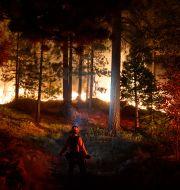 A firefighter monitors the Caldor Fire burning near homes in South Lake Tahoe, Calif., Monday, Aug. 30, 2021. Jae C. Hong / TT NYHETSBYRÅN