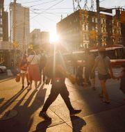 Toronto Cole Burston / TT NYHETSBYRÅN