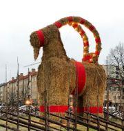 Årets bock överlevde julafton.  Marko Säävälä/TT / TT NYHETSBYRÅN